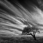 Clouds and Tree - Dog Rocks by Hans Kawitzki
