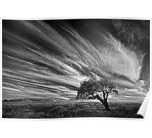 Clouds and Tree - Dog Rocks Poster