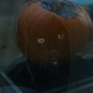 Unexpected Halloween Cat Effect by patjila