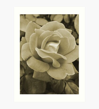 Faded Rose Art Print