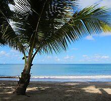Palm Beach by John Dalkin