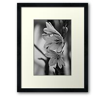 plants are forever in b/w Framed Print