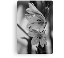 plants are forever in b/w Canvas Print