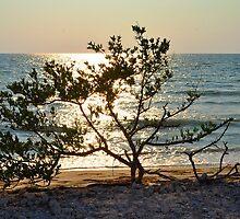 Tree on Coast at Sunset by joevoz