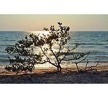 Tree on Coast at Sunset Photographic Print