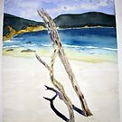 Drift wood in the sand at Little Oberon Bay by taariqhassan