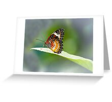 Butterfly on Stage Greeting Card
