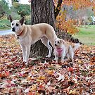 Gus and Gidget's  Autumn Holiday by Meg Hart
