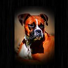 Boxer Dog by Janette  Kimbrough