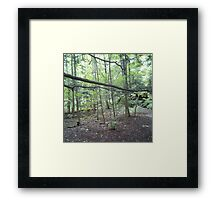 Forest Photography Framed Print