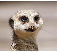meerkat face Photographic Print