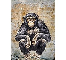 Chimpanzee Chimp Photographic Print