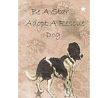 Adopt Rescue Dog Humane Star Photographic Print