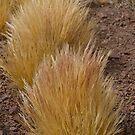 Grass  by DianaC