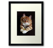 OPPOSITES DO ATTRACK...BEST FRIENDS,FELINE AND MOUSE, PILLOWS,TOTE BAGS,PICTURES,ECT. Framed Print