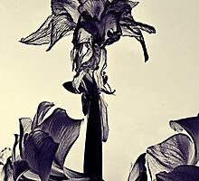 Decaying Flower 02 by LAURANCE RICHARDSON