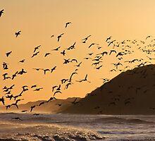 Oystercatchers at sunset by beavo