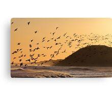 Oystercatchers at sunset Canvas Print
