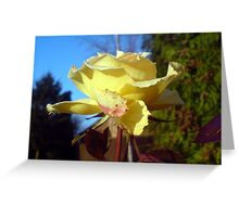 Lo, how a rose e'er blooming, from tender stem hath sprung  Greeting Card