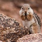 Chipmunk by Regenia Brabham