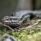 Little lizard by Neutro