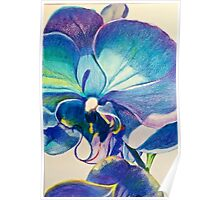 Stunning Purple Orchid Poster