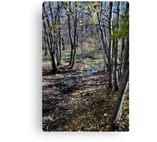 Stream in the Woods Canvas Print