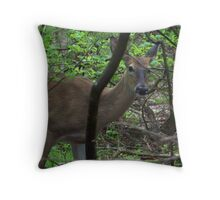 Deer in The Woods Throw Pillow