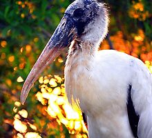 Wood Stork in the Sun by joevoz