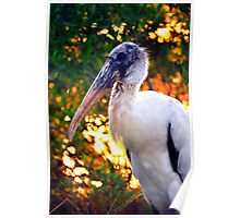 Wood Stork in the Sun Poster
