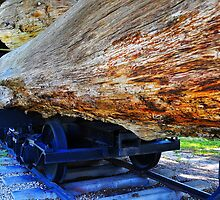 Train Hauling Logs by joevoz