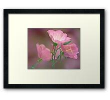 Pink Evening Primrose Framed Print