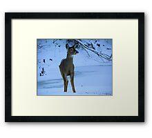 Cold Christmas Morning Framed Print