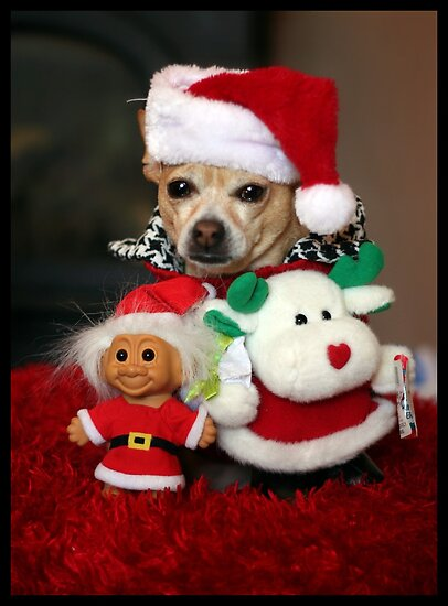 Christmas Chihuahua & Friends by AngieBanta