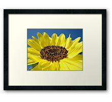 Sunflower Fine Art Prints Yellow Sunflowers Floral Framed Print