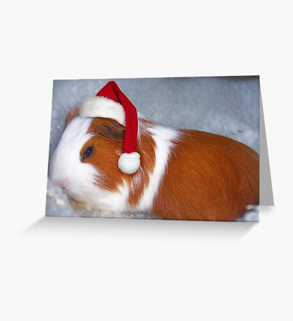 Silent Night, Piggy Night Greeting Card