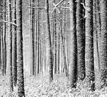 9.12.2011: In the Freezing Forest I by Petri Volanen