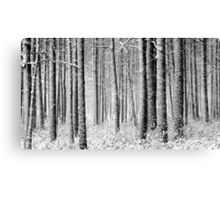 9.12.2011: In the Freezing Forest I Canvas Print