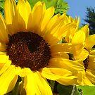 Summer Sunflowers Garden Fine Art Prints by BasleeArtPrints