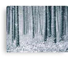 9.12.2011: In the Freezing Forest II Canvas Print