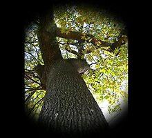 WeatherDon2.com Art 163 by dge357