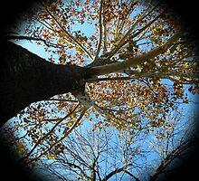 WeatherDon2.com Art 166 by dge357