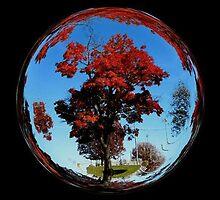 WeatherDon2.com Art 201 by dge357