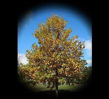 WeatherDon2.com Art 210 by dge357