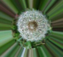 WeatherDon2.com Art 242 by dge357
