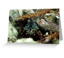 mantis shrimp Greeting Card