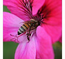 Bee January 2012 Photographic Print
