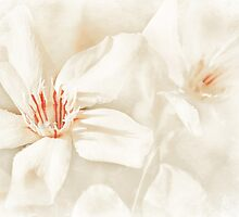 simply oleander by Teresa Pople