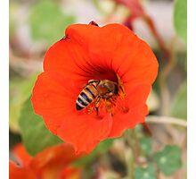 Bee February 2012 Photographic Print
