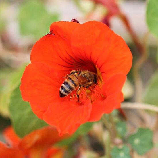 Bee February 2012 by saharabelle